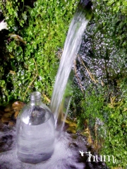 Spring water from the Kaimais