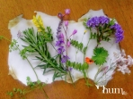 Herbs for Humonade