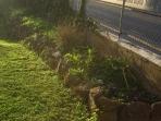 backyard-side-garden