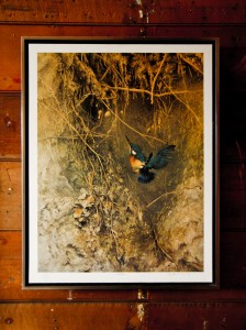 Kingfisher by Raymond Ching. Limited 850